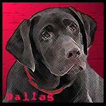dog Dallas